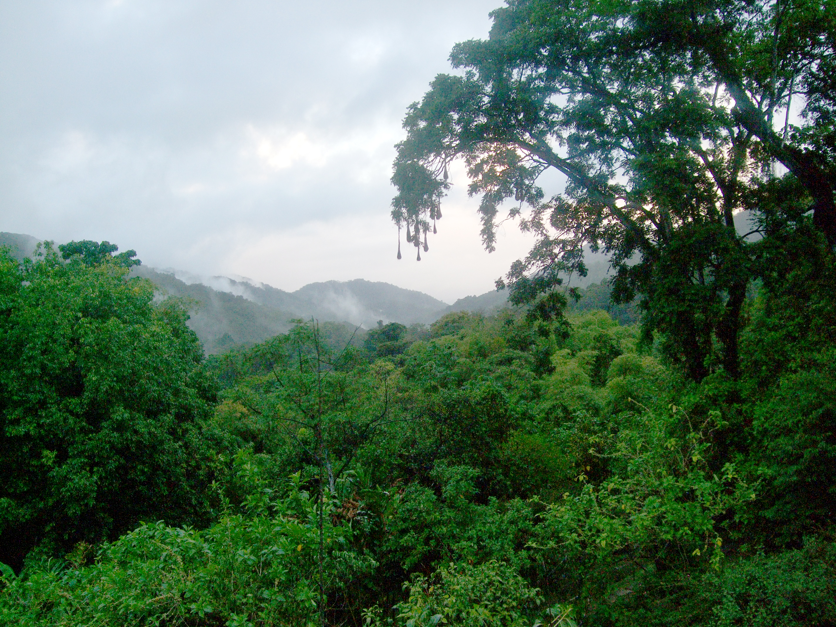 Trinidad Jungle