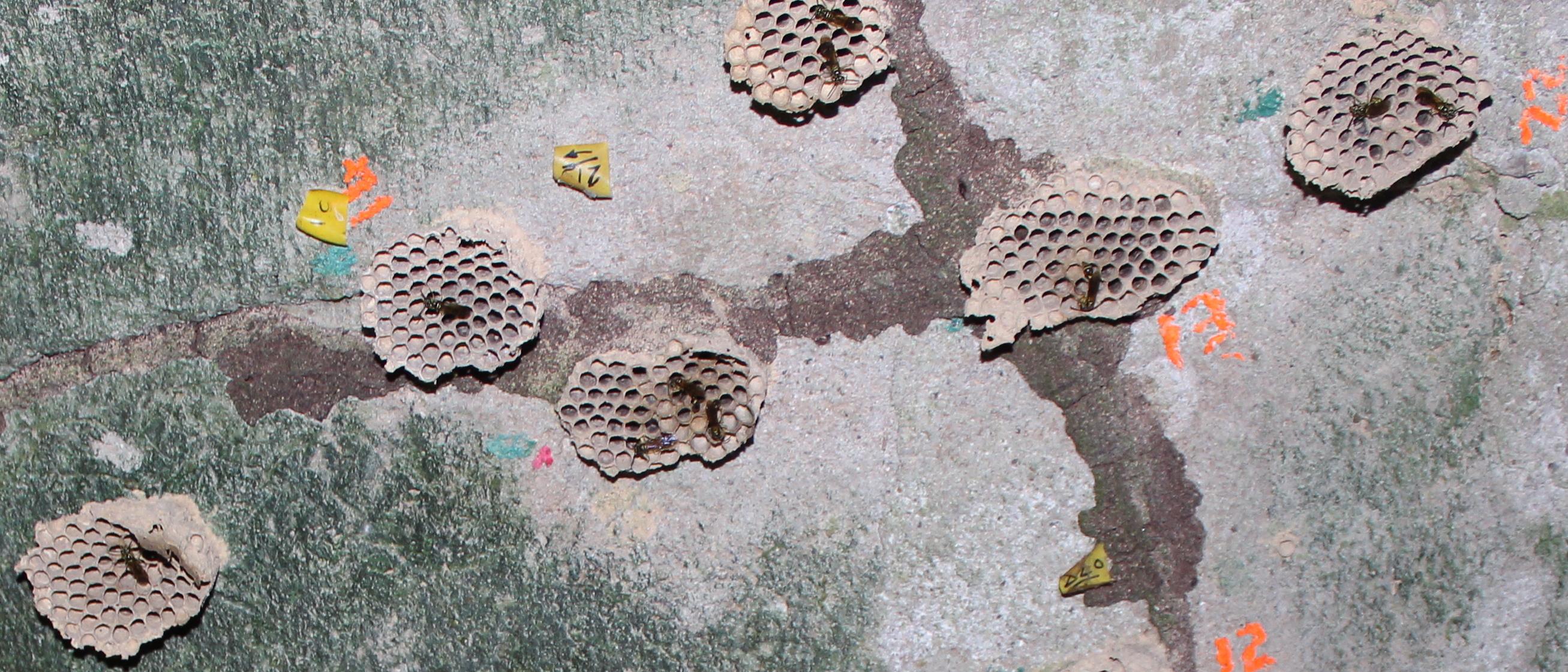 LF nest aggregation croppd